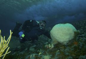 Large Volcano Sponge at Arrivals Height