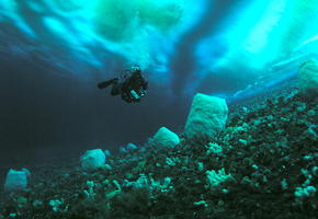 Diving Under The Ice II